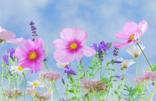 Bloemen voor het bruidsboeket: welke bloemen kies jij uit?